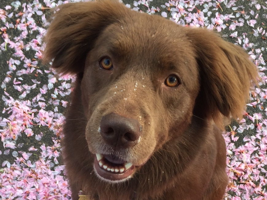 Dog and flower petals