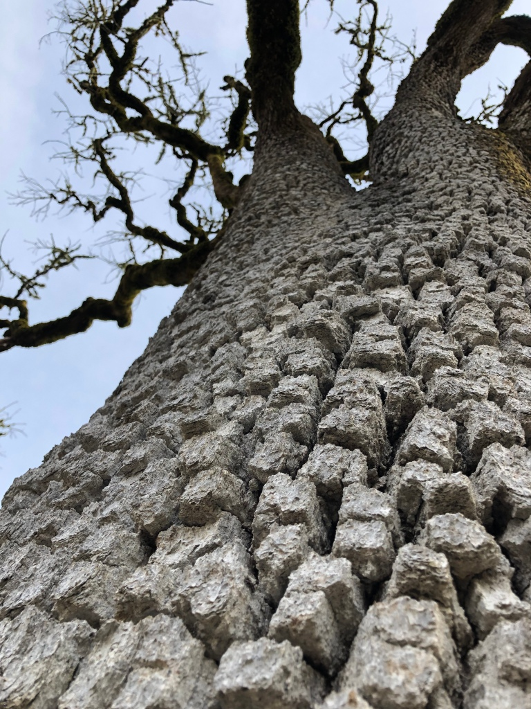 tree with building-block bark