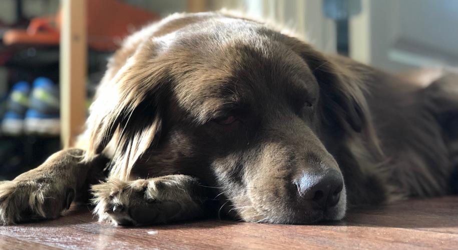 tired Leo