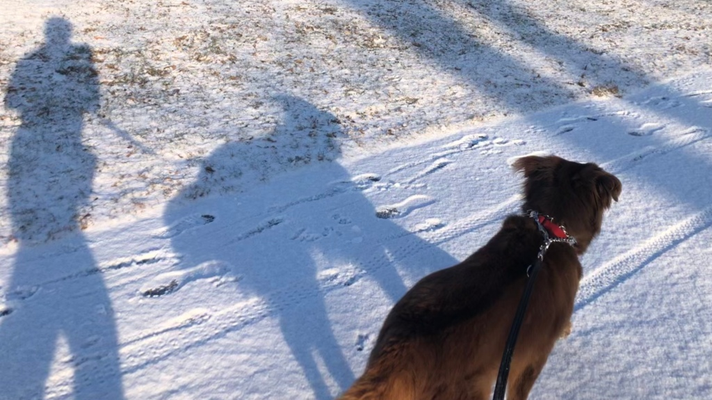 shadows of my dog and me running in the snow