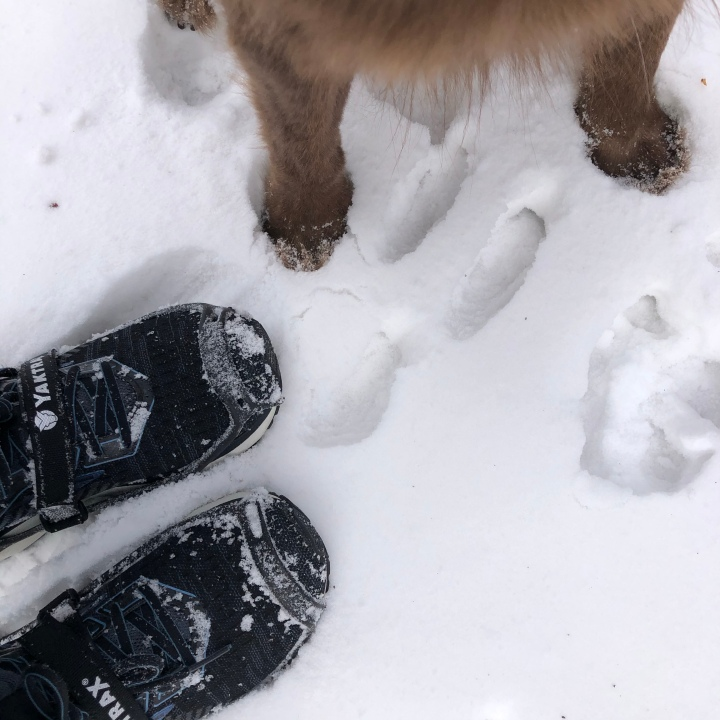 two species' feet