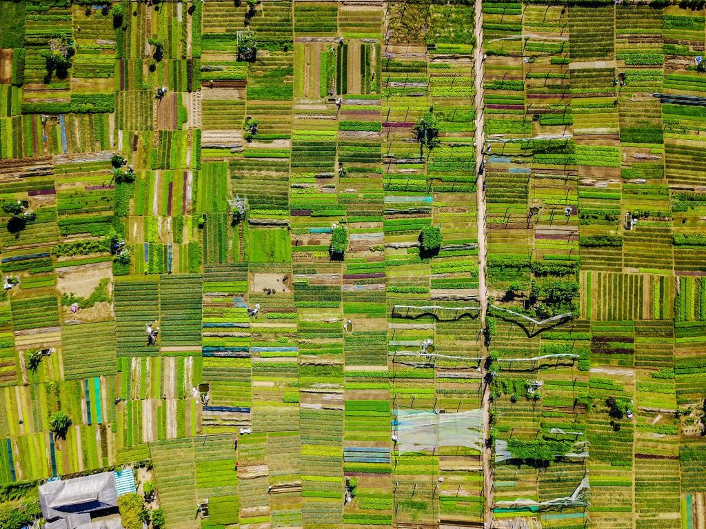 many narrow fields